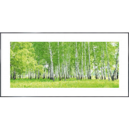 """Nielsen Gerahmtes Bild """"Birkenwald"""" 100,0 x 50,0 cm"""
