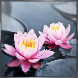 """Nielsen Gerahmtes Bild """"Wasser Blumen"""" 30,0 x 30,0 cm"""